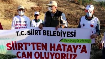 orman yangini -  Siirt Belediyesi, Hatay'da PKK'nın yaktığı ormanda fidan dikti