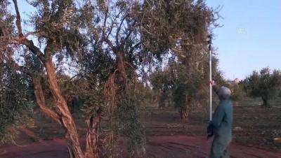 KİLİS - Sokağa çıkma kısıtlamasından muaf tutulan çiftçiler tarlanın yolunu tuttu