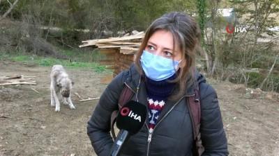 harekete gec -  Ölmekten kurtarılan 'Toki' değişimi ile şaşırtıyor