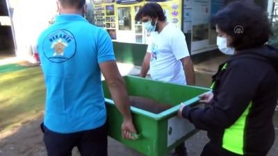 rontgen - MUĞLA - Antalya'da yaralı halde bulunan caretta caretta tedavi ediliyor
