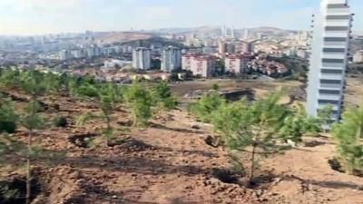 ogrenciler - ANKARA - Akademisyen Ceren Damar Şenel'in adı hatıra ormanında yaşayacak