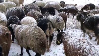 akalan - MUŞ - Kar yağışına hazırlıksız yakalanan çobanlar zor anlar yaşadı