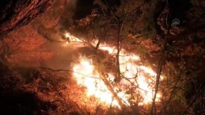 orman yangini - KASTAMONU - Araç'ta orman yangını