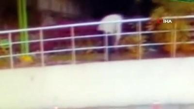 ceviz agaci -  Karabük'te gazeteciye saldırı