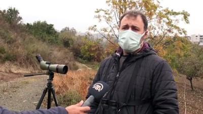 objektif - HATAY - Hatay'da görüntülenen 2 yeni kuşla kayıt altına alınan tür sayısı 372'ye ulaştı