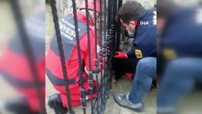 demir parmaklik -  Yavru köpeğin yaramazlığı başına iş açtı