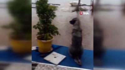 Urla'yı sağanak yağış vurdu...Evleri su bastı