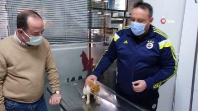 cene kemigi -  Hayvan severler çene kemiği kırılan kediye sahip çıktı