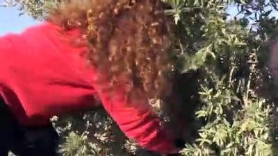 KİLİS - Kadın girişimcinin zeytinyağında ihracat başarısı
