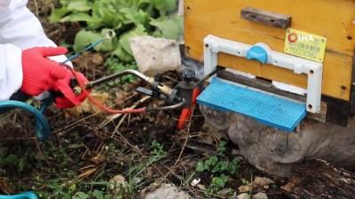 Arı kolonisinde 'varroa' hastalığı tespit edilen üreticinin arıları kurtarıldı