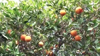 Sağlık çalışanlarına 'portakal' dopingi