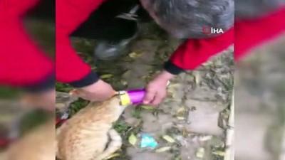 Burdur'da başı mama kutusuna sıkışan kedi kurtarıldı