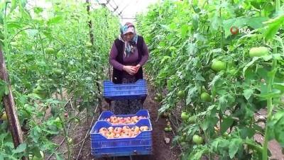prostat kanseri -  Kumlucalı çiftçiden 'kış domatesini yemeyin' diyen doktora klipli cevap Videosu