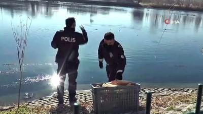 Kızılırmak'ta aç kalan kaz ve ördekleri polisler besledi