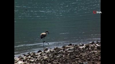 - Tunceli'de flamingo görüntülendi