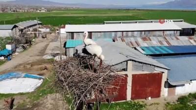 leylek koyu -  Göç yolunda mola veren binlerce leylek İznikli çiftçinin tarlasını istila etti