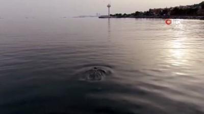 deniz trafigi -  Yunuslar İstanbul Boğazı'nı çok sevdi