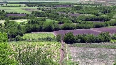 habitat - 'Dünya mirası' Hevsel Bahçeleri'ne dökülen hafriyatın kaldırılma çalışması sürüyor - DİYARBAKIR