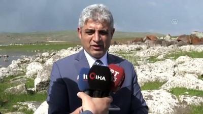 Bitlis'te iki göle 70 bin yavru sazan balığı bırakıldı