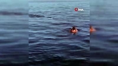 deniz trafigi -  - İspanya'da paralimpik yüzücü köpek balığıyla burun buruna geldi