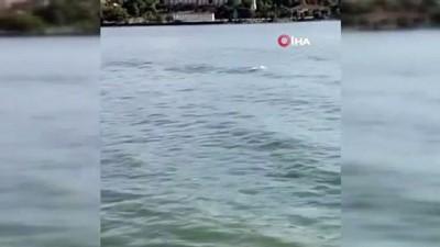 deniz trafigi -  Yunusların görsel şöleni böyle görüntülendi