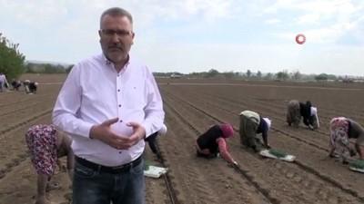 toprak mahsulleri ofisi -  Başkan Özkan'dan pancar üreticilerine sevindirici haber