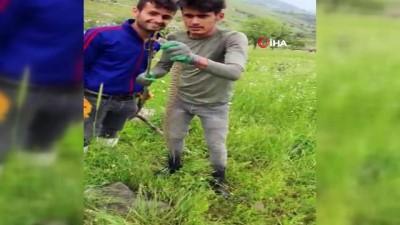 habitat -  Türkiye'nin zehri en ölümcül yılanı Derecik'te bulundu