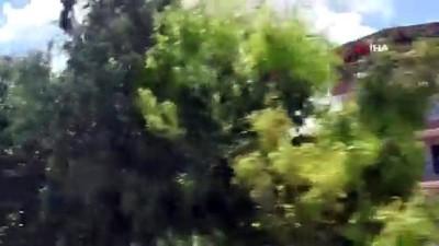 akon -  Söke'de orman yangını