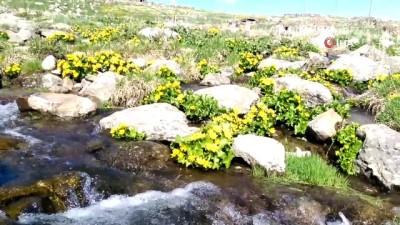 yayla turizmi -  Ardahan'da yaz ve kış bir arada