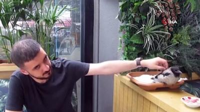 bag kur -  Yuvadan düşen yavru karga restorandaki müşterilerin ilgi odağı oldu