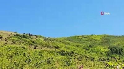 bassavciligi -  Bitlis'te 290 kilo EYP, 1 kilo plastik patlayıcı ve 152 adet fünye ele geçirildi