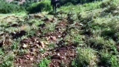 keskin nisanci - Diyarbakır'da 110 kilogram esrar, 330 bin 603 kök Hint keneviri ele geçirildi