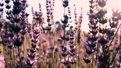 Lavanta diyarı İdris köyü doğal stüdyo ortamı arayanların uğrak yeri oldu - AFYONKARAHİSAR