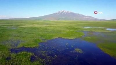 balaban -  Kuş Cenneti Cil Gölü'nün görüntüsü hayran bırakıyor