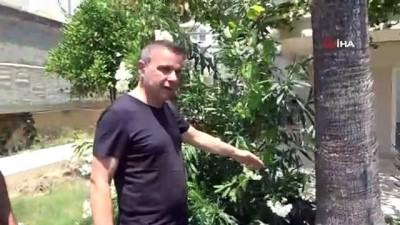 palmiye agaci -  Üst katların manzarasını kapattığı gerekçesiyle kesilen palmiye ağacı site sakinlerini isyan ettirdi