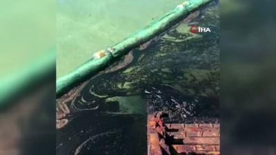 - Mauritius'daki petrol felaketine karşı halk saçlarını bağışlıyor