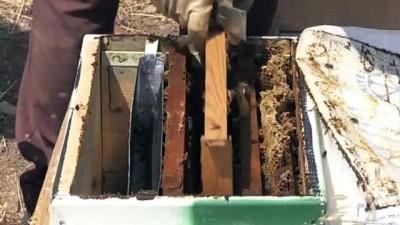 saldirganlik - Adıyaman'ın 'yerli bal arıları' çoğaltılacak