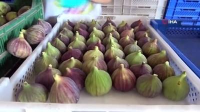 Bursa'dan Avrupa sofralarına incir ihracatı