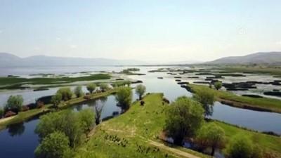 Nilüferleriyle ünlü Işıklı Gölü doğal güzellikleriyle cezbediyor - DENİZLİ