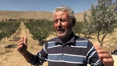 50 yıl sonra köyüne dönen müteahhit elma bahçesi kurdu - KAYSERİ