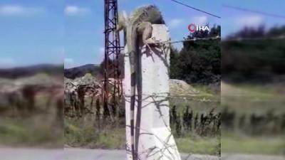Çatalca'da İguana şaşkınlığı