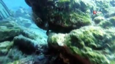 Denizlerin korkulu rüyası Bodrum'u istila etmeye başladı