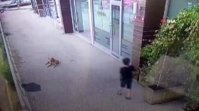 saldirganlik -  İstanbul'da küçük çocuğa köpek saldırısı kamerada