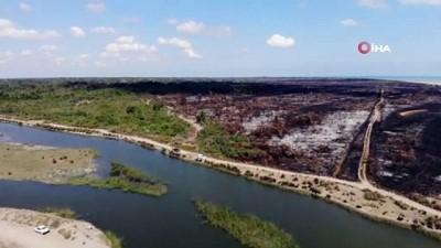 habitat -  Yangın sonrası Kuş Cenneti'nden geriye bu görüntüler kaldı