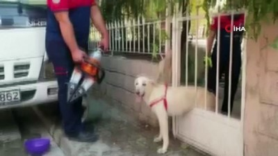 demir parmaklik -  Demir parmaklıklara sıkışan köpeğin yardımına itfaiye koştu