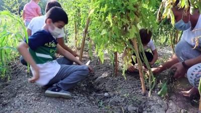 solucan gubresi - 'Ata tohumları' minik öğrencilerin elinde hayat buluyor - KARABÜK