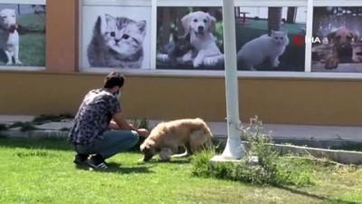 Sanatçı Ömür Gedik'in bildirdiği köpek tedavi edildi