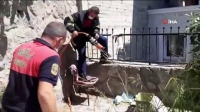 demir parmaklik -  Çatıdan atlayan kedi demir parmaklıklara saplandı