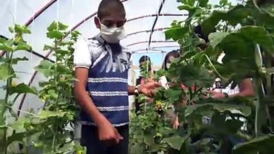 Karslı öğrenciler, okul bahçesindeki serada organik sebze ve meyve üretiyor