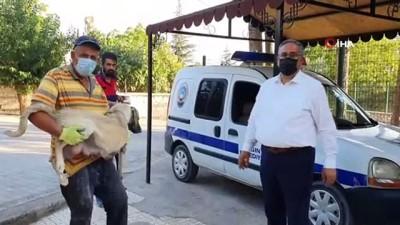 hukumet konagi -  Ölüme terk edilen 10 yavru köpek, 3 gün sonra annelerine kavuştu